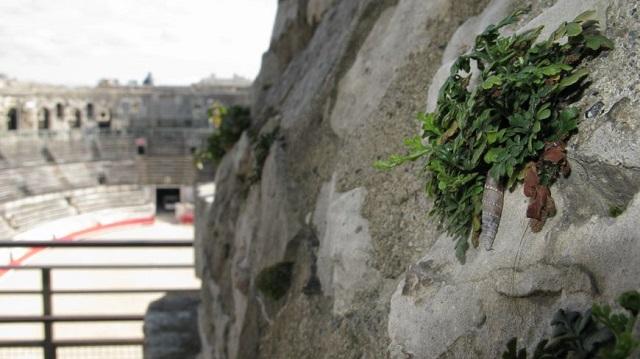 La Clausilie romaine mesure à peine plus d'un cm et demi - Crédits : Radio France - Sylvie Duchesne