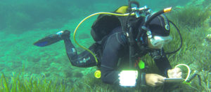 Plongeur en milieu marin, Biotope.
